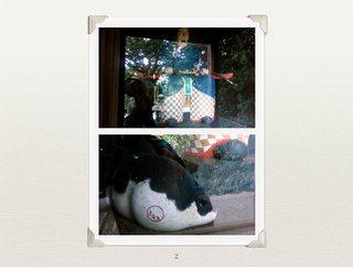 直島_神社のねこにミチヨとハンコが.jpg